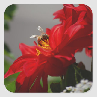 Busy Bee on Red Dahlia Stickers