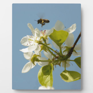 busy bee plaque