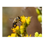 Busy Bee Post Card