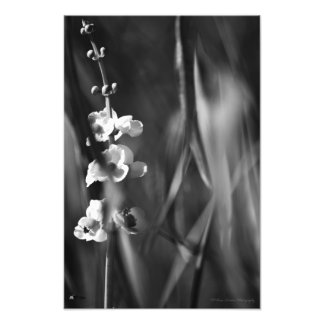 Busy Bees - Fine Art Photo Print Photograph