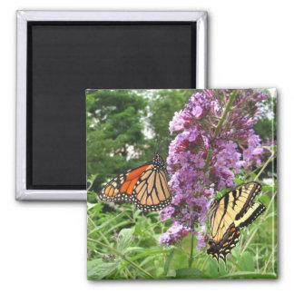 Busy Butterflies ~ magnet