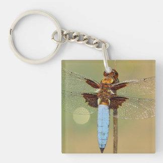 Busy Dragonfly Keychain
