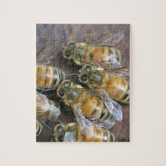 Busy honey bees jigsaw puzzle