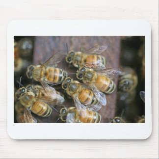Busy honey bees mouse pad