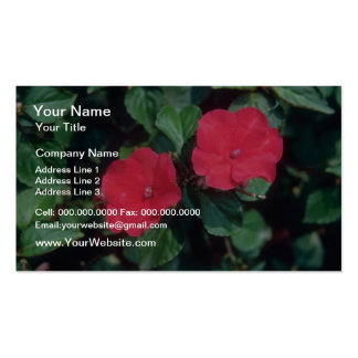 Busy Lizzy Impatiens Wallerana flowers Business Cards
