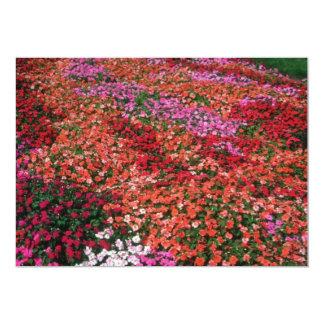 Busy Lizzy (Impatiens Wallerana) flowers Announcements