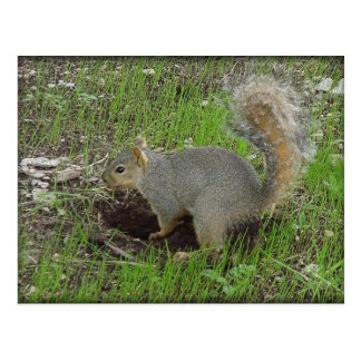 Busy Squirrel Post Card