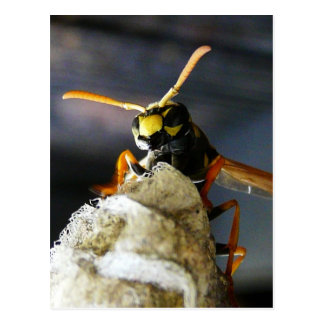 Busy Wasp Postcards