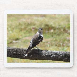 BUTCHER BIRD RURAL QUEENSLAND AUSTRALIA MOUSE PAD