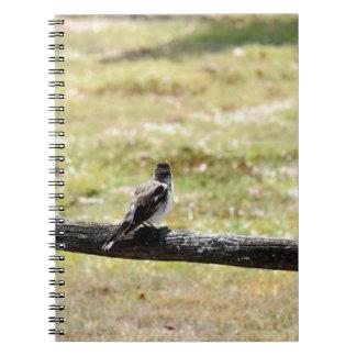 BUTCHER BIRD RURAL QUEENSLAND AUSTRALIA NOTEBOOK