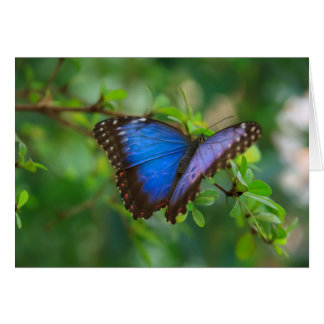 buterfly photograph card
