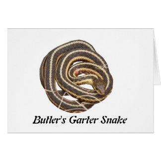 Butler's Garter Snake Greeting Cards