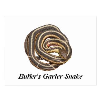 Butler's Garter Snake Post Card