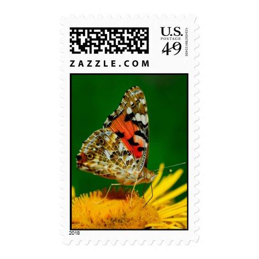 Buttefly en una flor amarilla franqueo