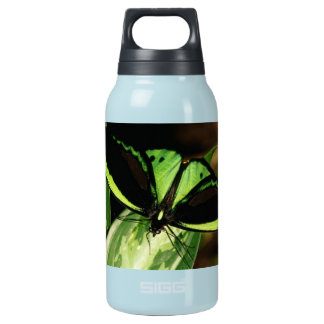 Buttefly Insulated Water Bottle