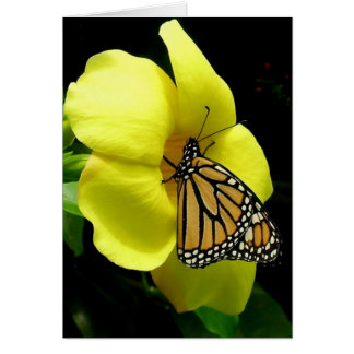 Buttefly On Yellow Lily Friendship greeting Card