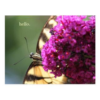 Buttefly sucking on Buddleia Postcard