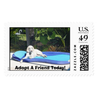 Butter - Adopt A Friend Today! Postage