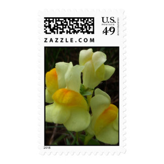 Butter and Eggs Flower Stamp