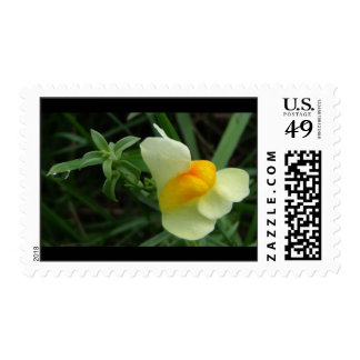 Butter and Eggs Flower with Dewdrop Stamp