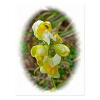Butter 'n Eggs Wildflower Postcard