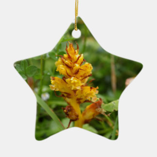 Butterbur broom (Orobanche flava) Ceramic Ornament