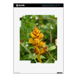 Butterbur broom (Orobanche flava) Decals For iPad 3