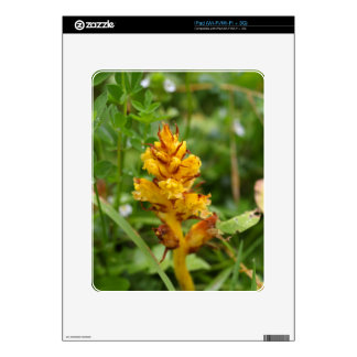 Butterbur broom (Orobanche flava) Decals For The iPad