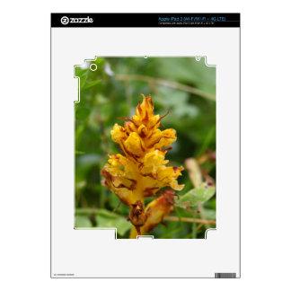 Butterbur broom (Orobanche flava) iPad 3 Skins