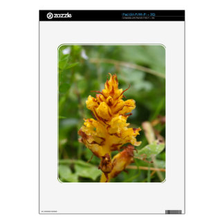 Butterbur broom (Orobanche flava) iPad Skin