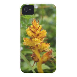 Butterbur broom (Orobanche flava) iPhone 4 Case