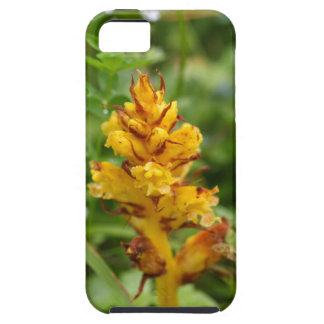 Butterbur broom (Orobanche flava) iPhone SE/5/5s Case