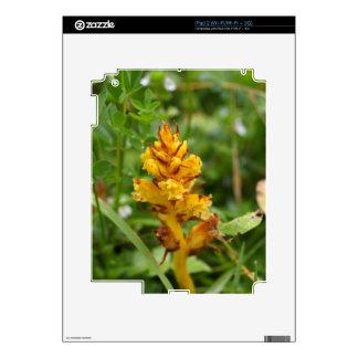 Butterbur broom (Orobanche flava) Skin For iPad 2