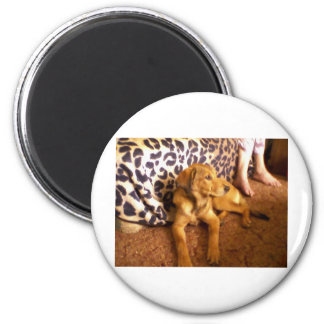 buttercup 2 inch round magnet