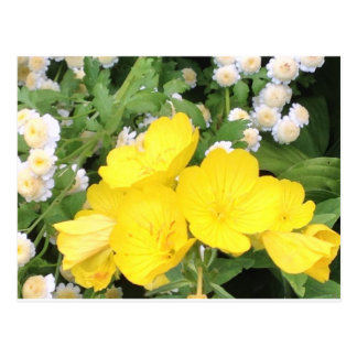 Buttercup and Babies Breath Postcard