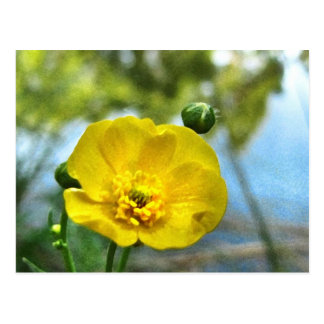 Buttercup at the Pond Postcard