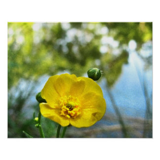 Buttercup at the Pond Poster