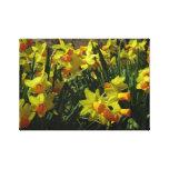 Buttercup Daffodils Canvas Prints