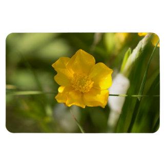 Buttercup Flower Rectangular Photo Magnet