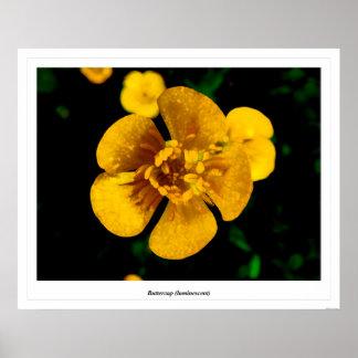 Buttercup luminescent print