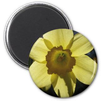 Buttercup Magnet