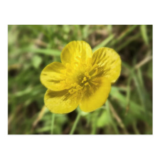 buttercup postcard