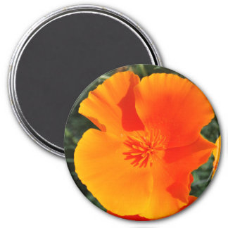 Buttercup Sunshine 3 Inch Round Magnet