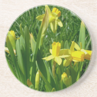 Buttercup Yellow Daffodils Flowers Coaster