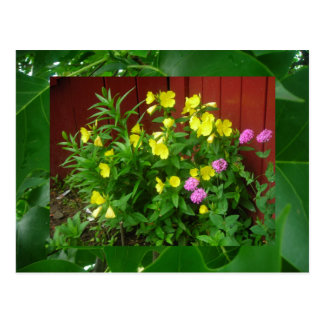 Buttercups and leaves postcard