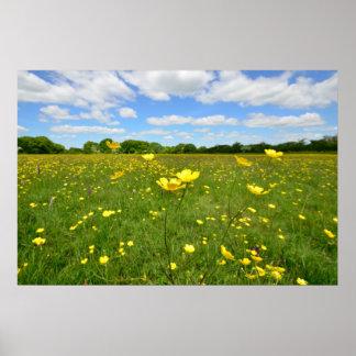 Buttercups in Meadow Poster