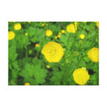 Buttercups Stretched Canvas Print