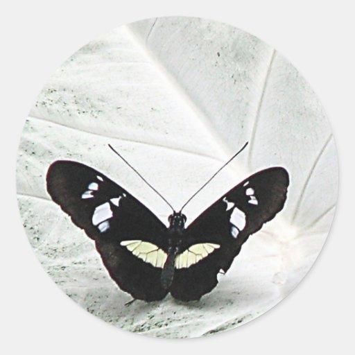 Butterfl negro etiqueta redonda