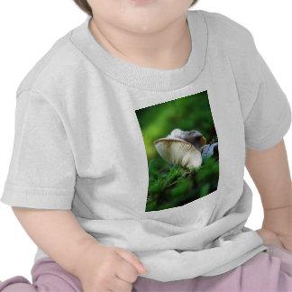 Butterflied Tee Shirts