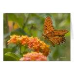 butterflies 022 greeting cards